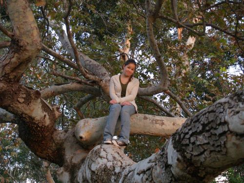 Lucy in a tree