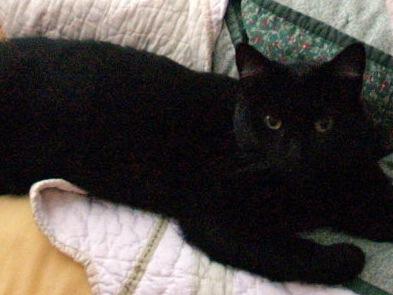 The cat Bastet