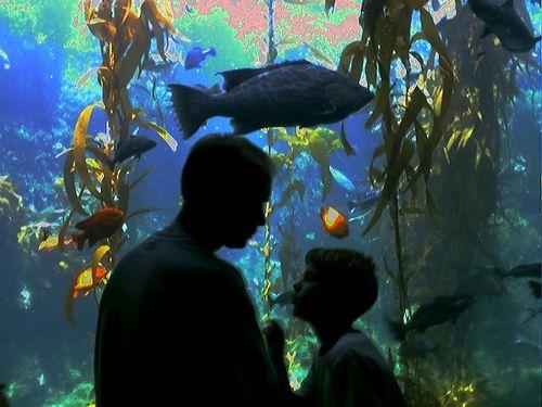Fish tank 1