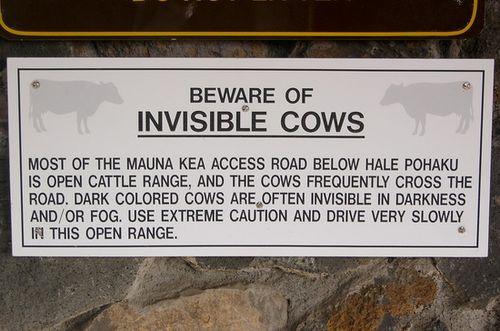 Mauna kea cows