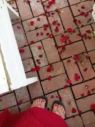 Toes and rose petals