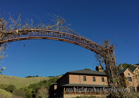 Skywalker-Ranch-vineyards-del-cielo-my-big-fat-cuban-family copy
