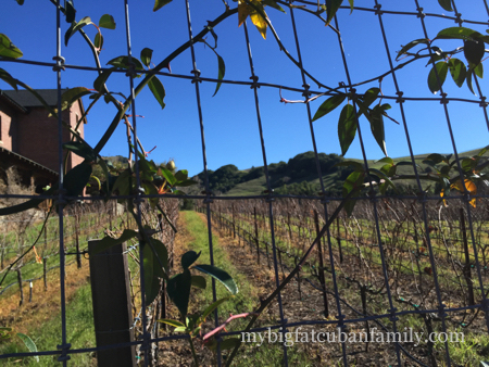 Skywalker-Ranch-vineyards-fence-my-big-fat-cuban-family copy