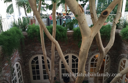 Skywalker-Ranch-main-house-atrium-ficus-my-big-fat-cuban-family copy