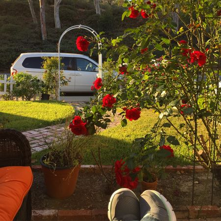 My-big-fat-cuban-family-roses