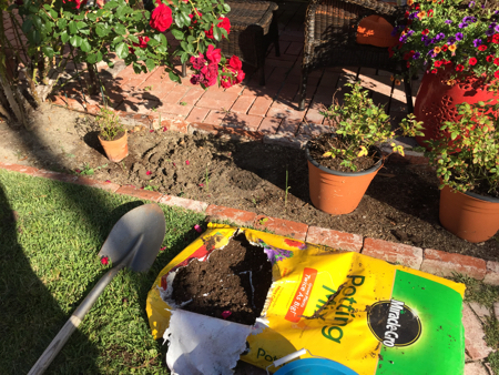 My-big-fat-cuban-family-garden7