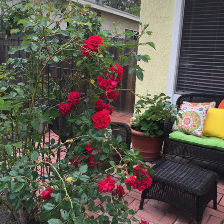 My-big-fat-cuban-family-garden-stairway-to-heaven-roses
