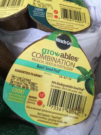 My-big-fat-cuban-family-scotts-seed-pod