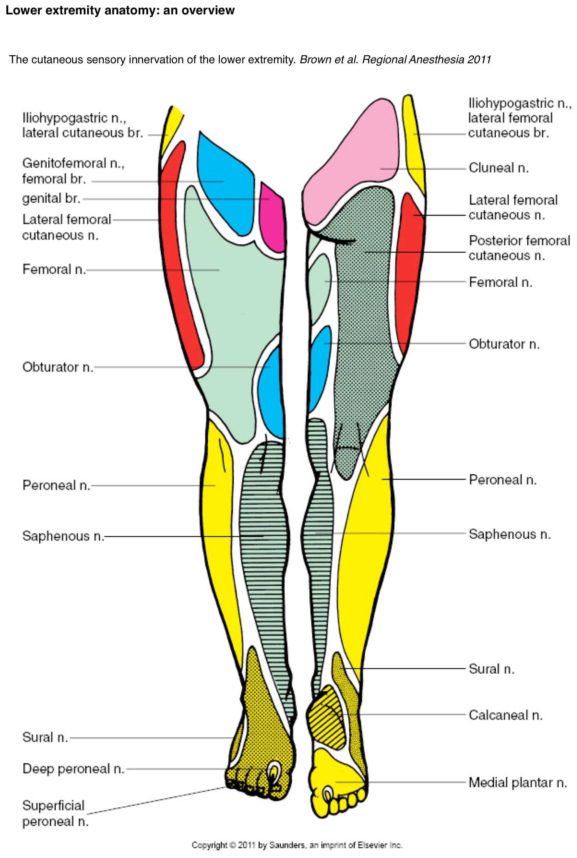Lower extremity — Highland EM Ultrasound Fueled pain management