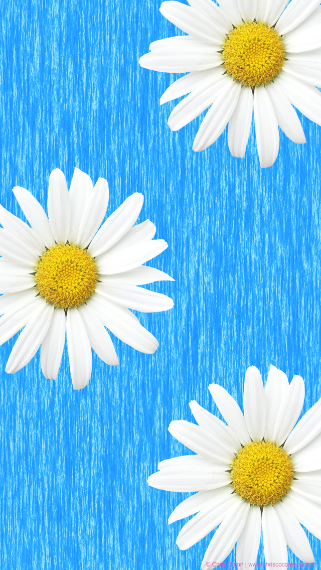 Click Here To Download The SUMMER DAISIES