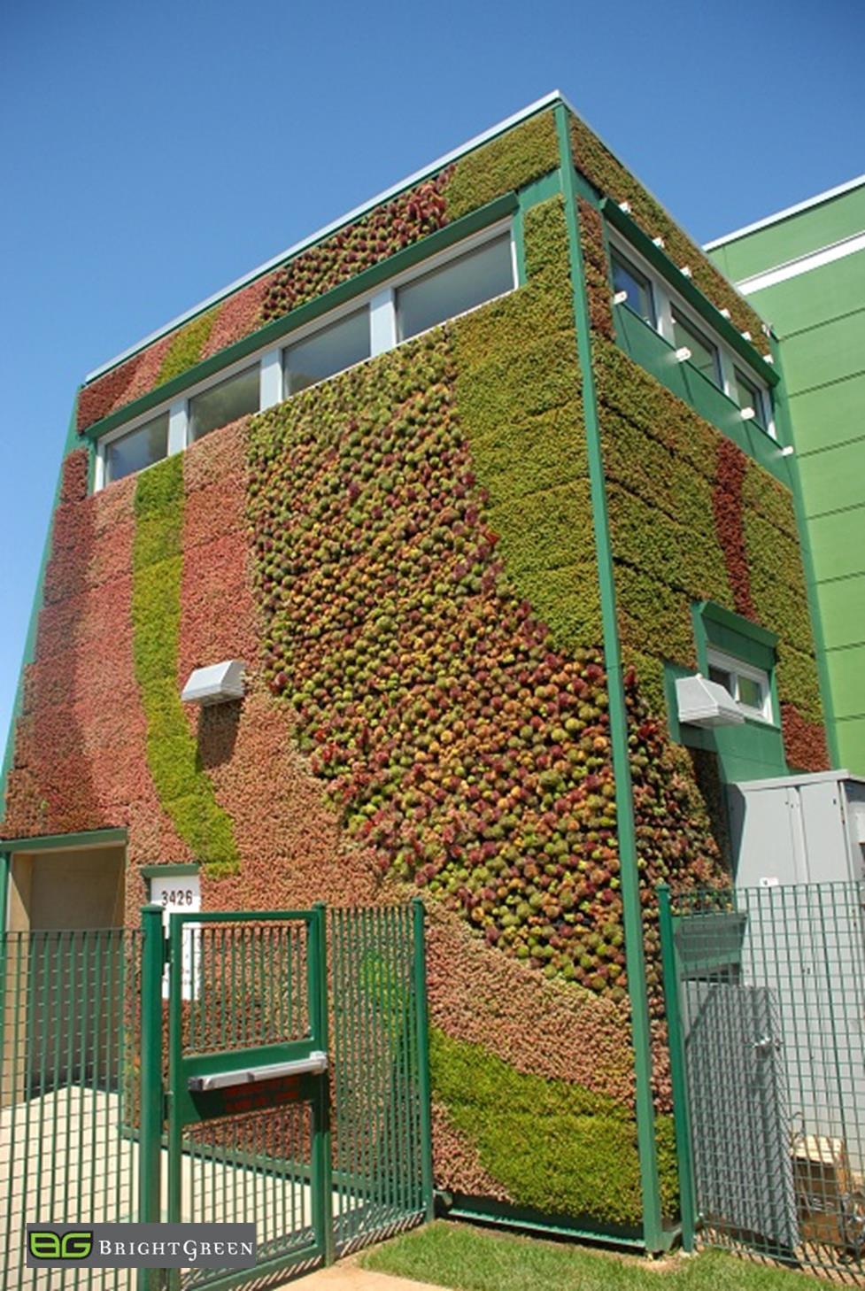 Edible Walls - Shade Tolerant Gardens