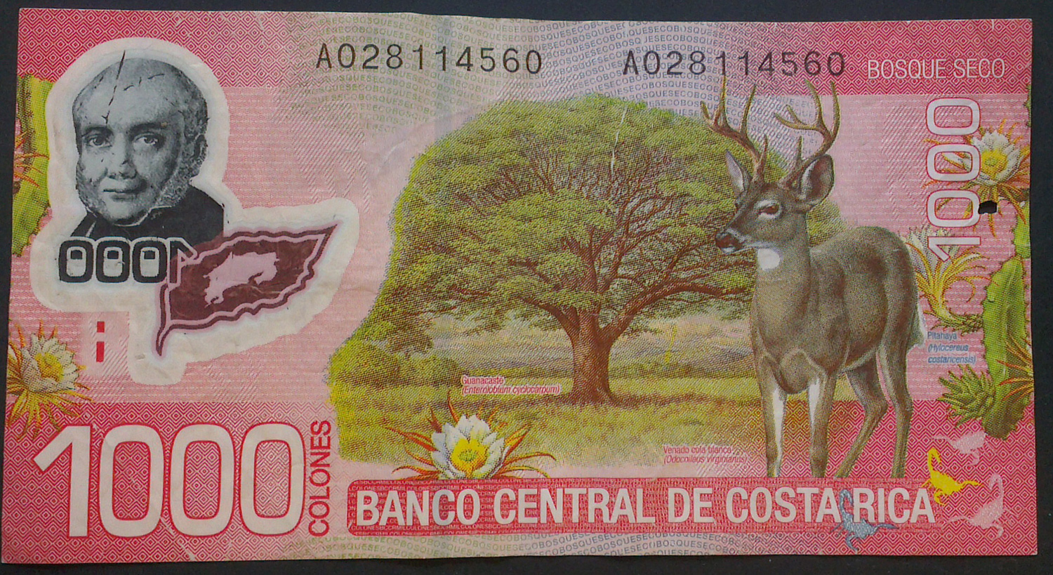 The Colon Is Costa Rican Currency Image Linked Of A 1000 Colones Bill Which Roximately 1 75 Usd For Exact Exchange Rate Check Banco