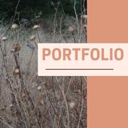 portfolio_proz.png