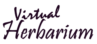 virtual herbarium link graphic