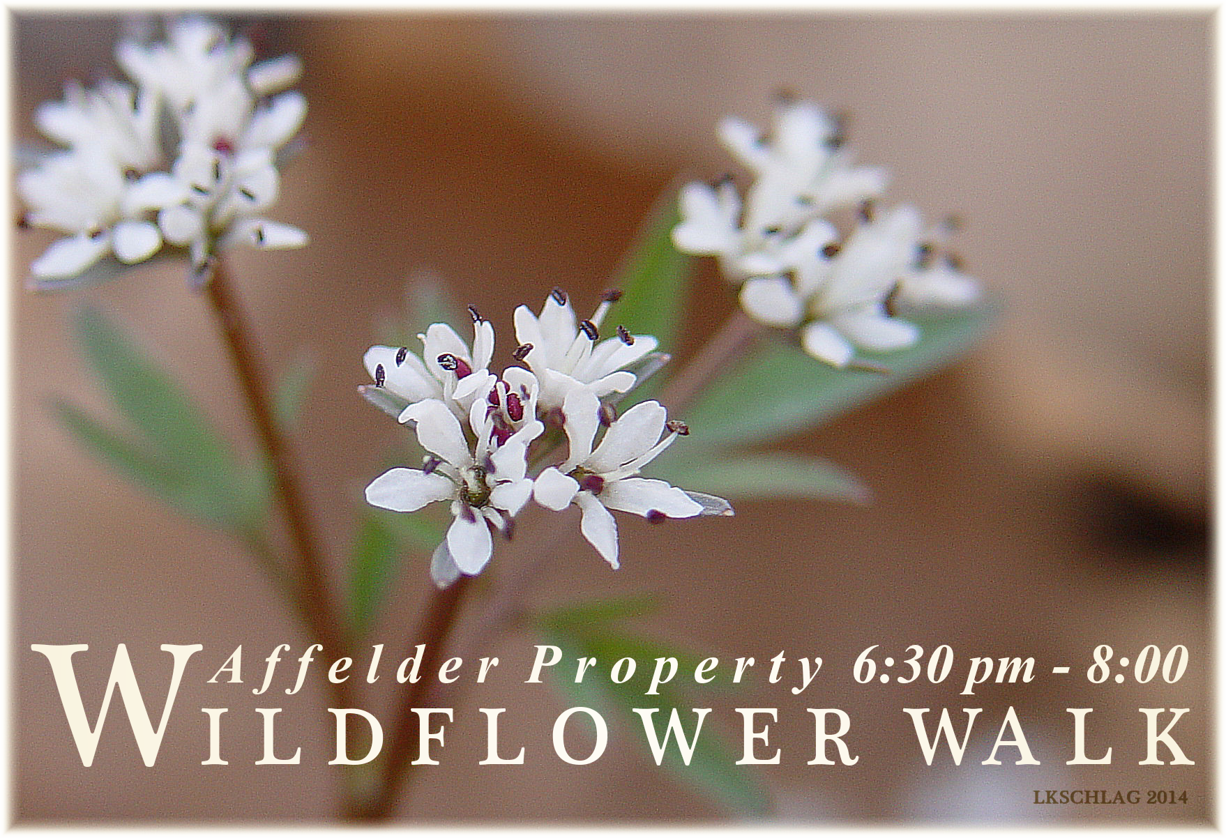 Wildflower Walk program infographic