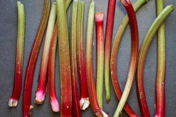 rhubarbgalette-2