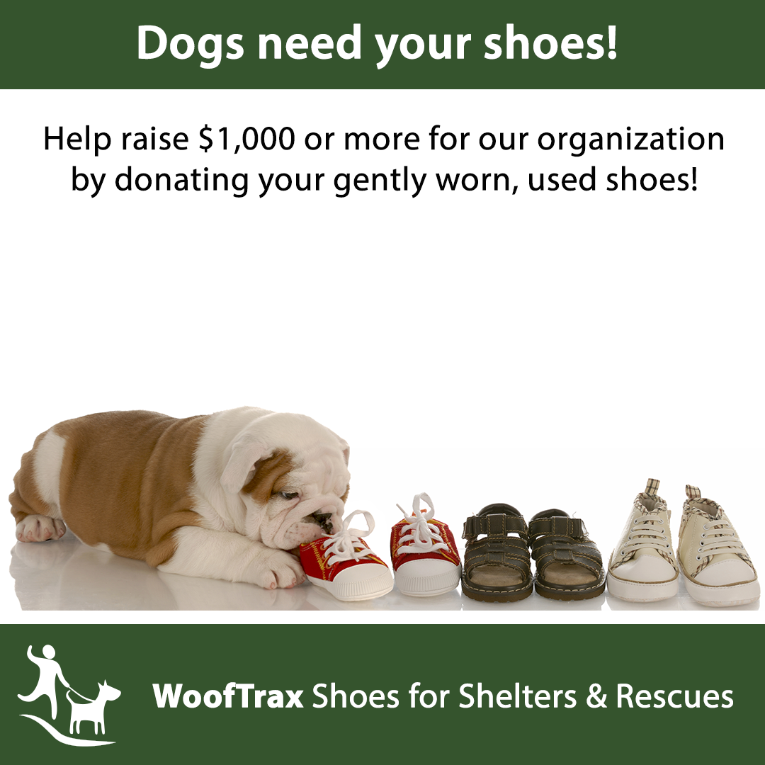 Animal welfare organizations, animal shelters: a selection of sites