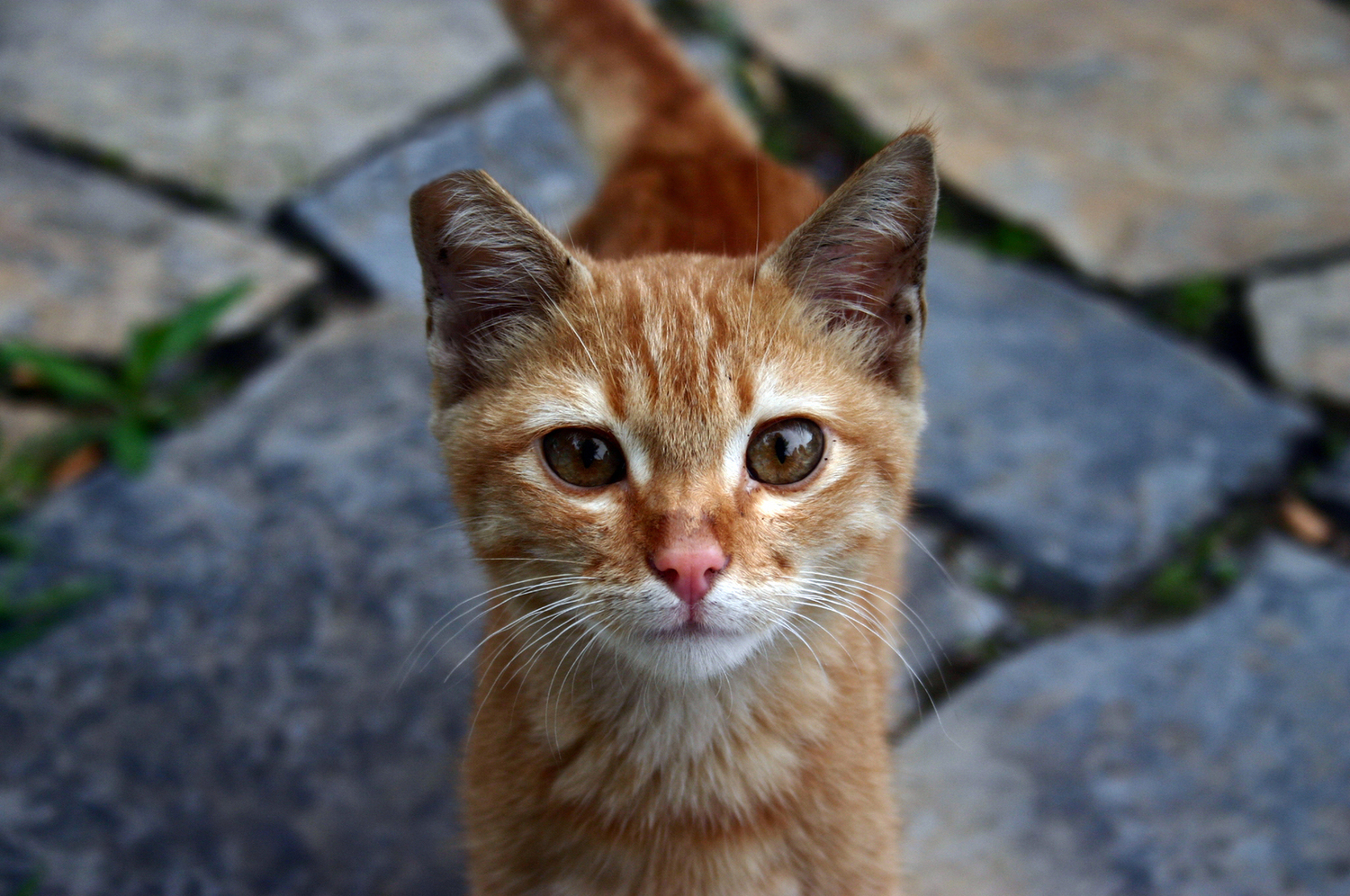 frequently asked questions u2014 feral cat coalition of oregon