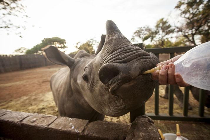 """Rhino"