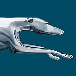 Greyhound App