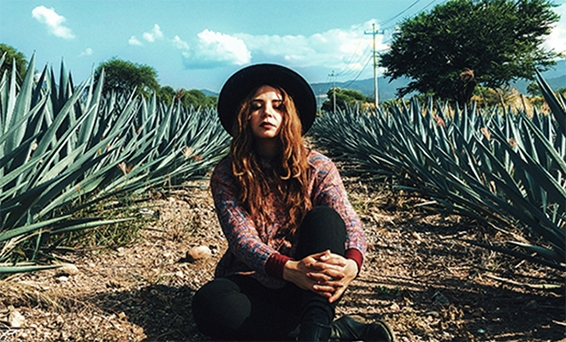 Tequila Agave Field
